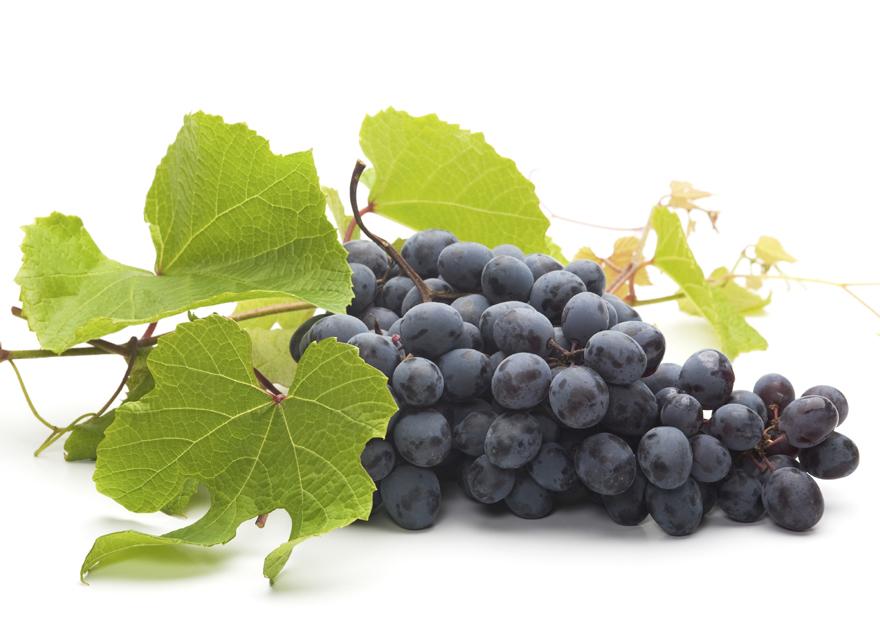 получить в листьях винограда есть ресвератрол фото стиле